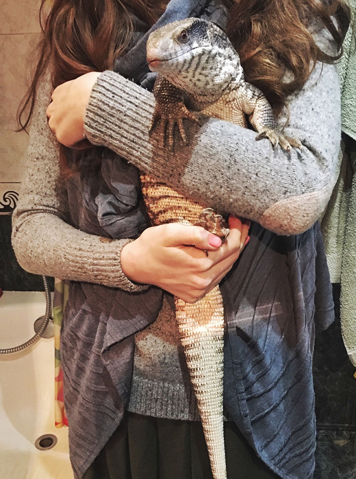 cute-lizard-pet-cuddles-savannah-monitor-astya-lemur-50