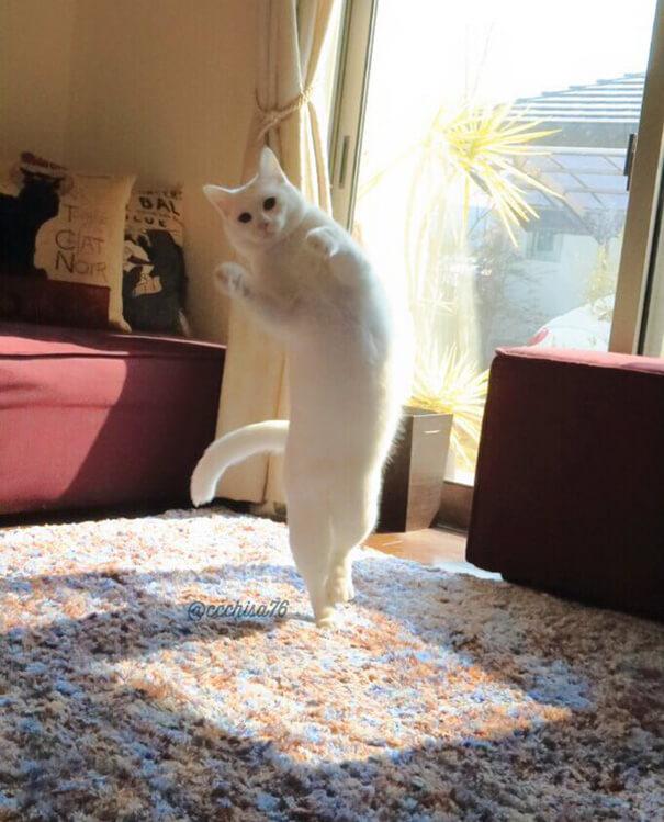 Кошка танцует балет пока никто не видит