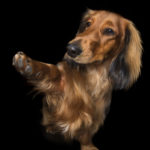 Лапы вверх! Фотограф Алекс Кёрнс снимает собак говорящих