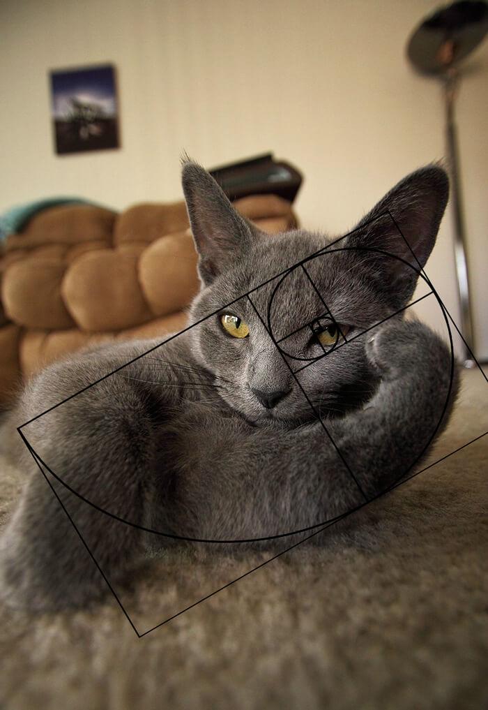 Фотографии, доказывающие что кошки идеальны с математической точки зрения