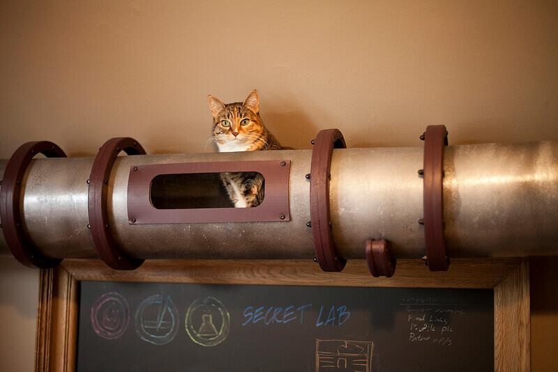Cat Transit System 2