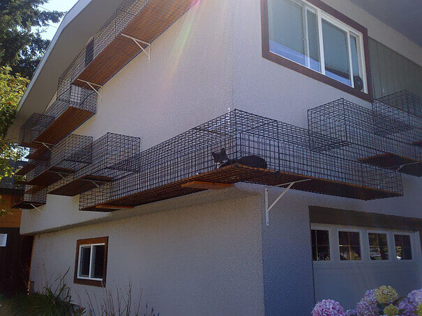 Catwalk Around The House