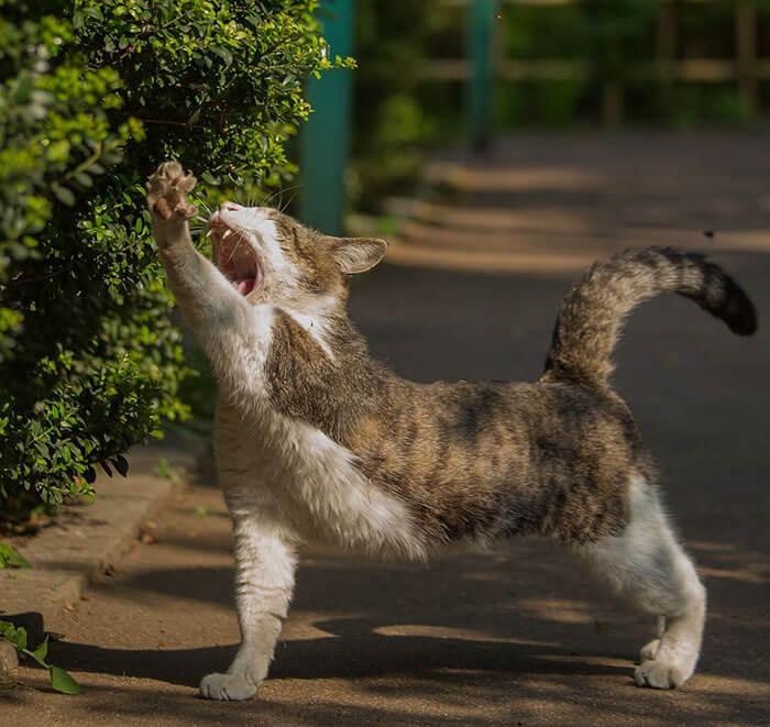 Японский фотограф документирует бродячих кошек Токио