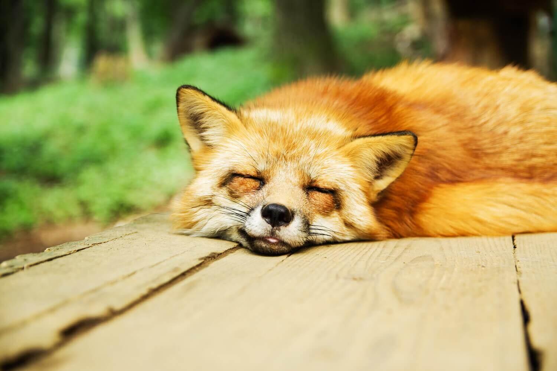 Отдыхай опережая усталость