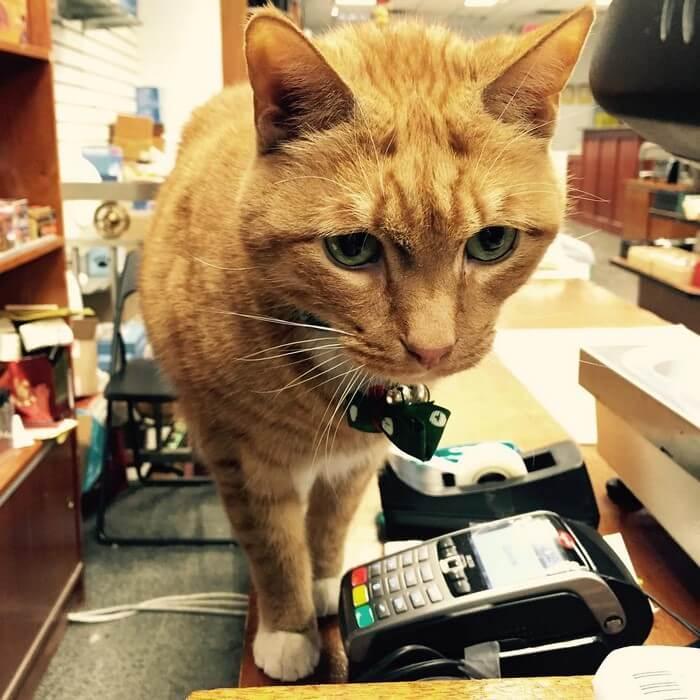Кот провел 9 лет работая в магазине, без выходных дней