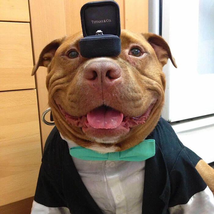 Собака не перестает улыбаться, с тех пор как была спасена из приюта