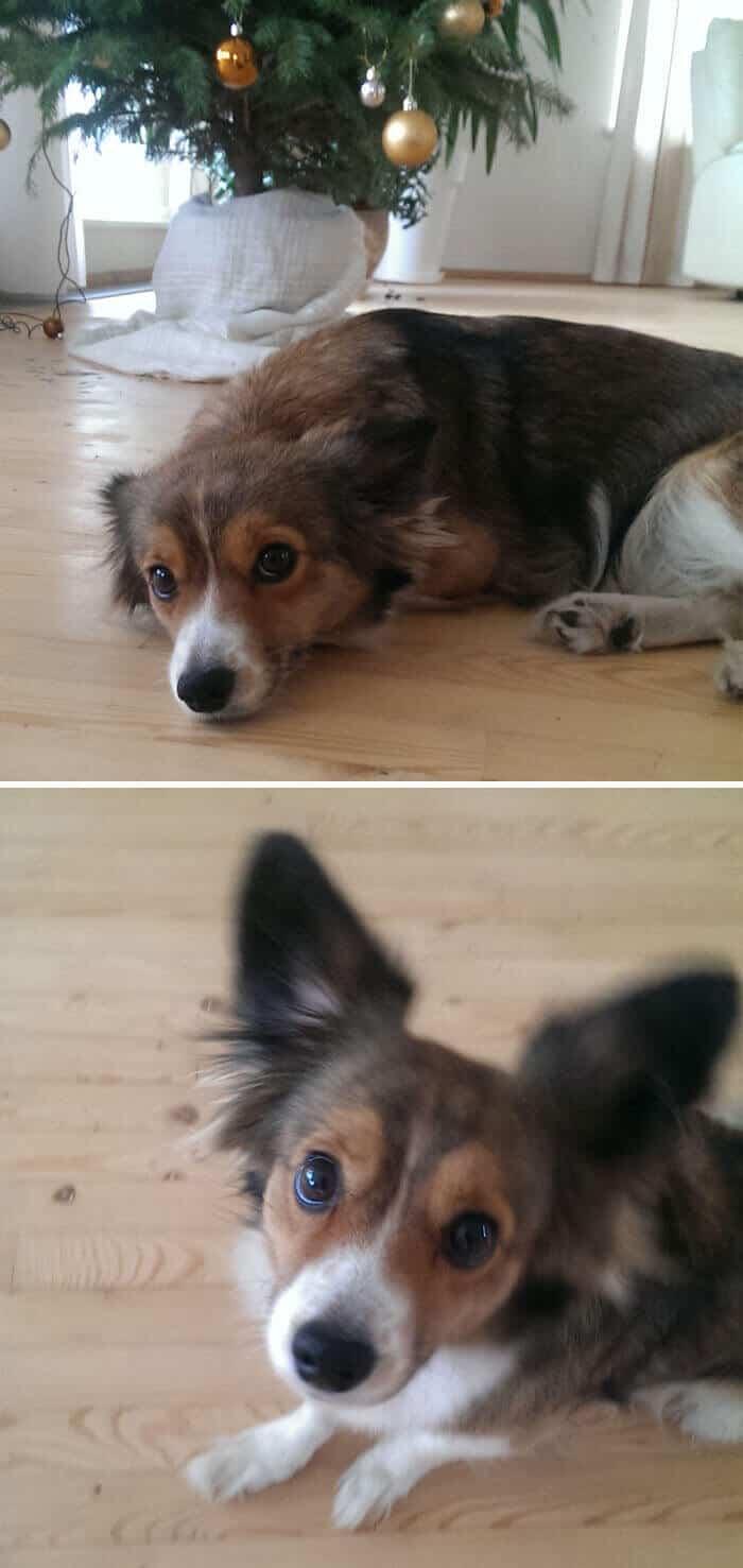 Животные до и после того как их назвали Хорошим мальчиком