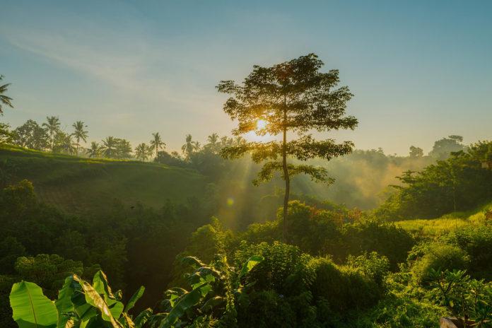 Топ 7 самых необычных деревьев в мире